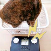 家猫さま(メス3歳)の体重変化とダイエット。