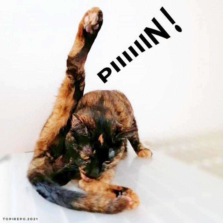 ぴーーんと足を上げる猫