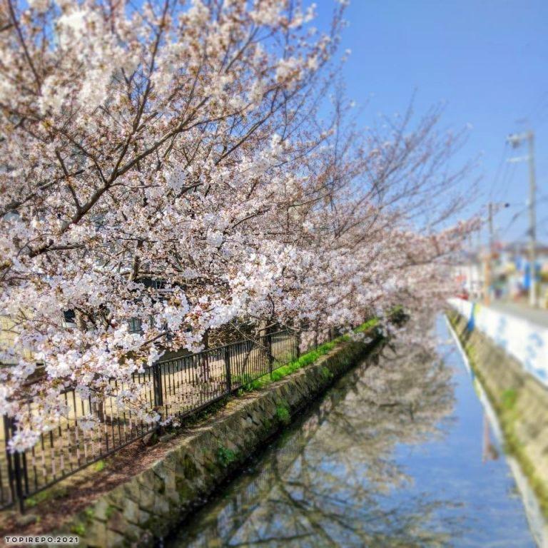 2021 桜