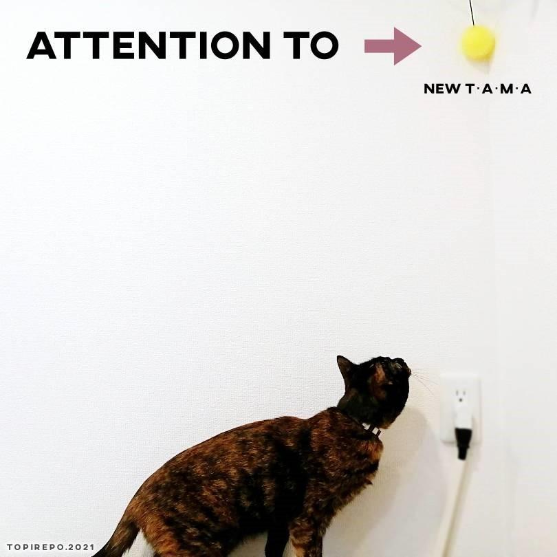 新しい玉のおもちゃとうちの猫がただカワイイ。