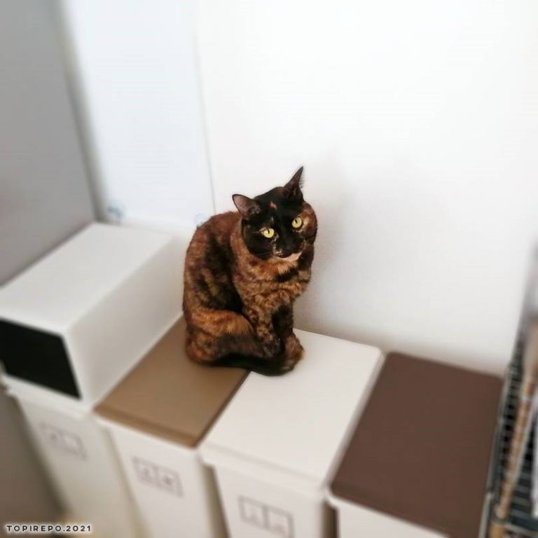 ゴミ箱に乗る猫
