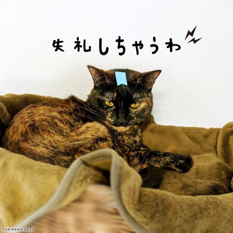 ポストイットを貼られた猫