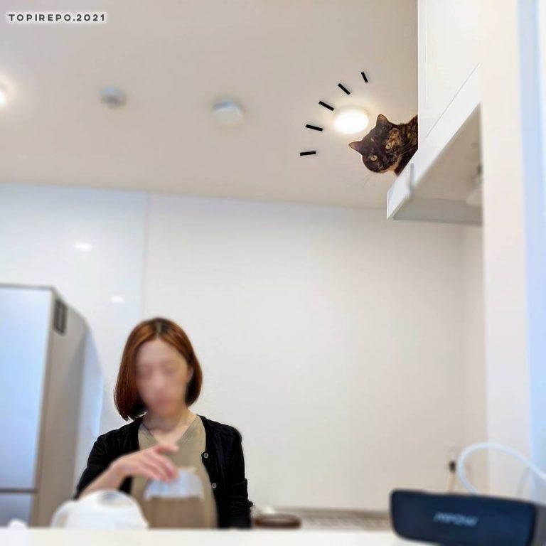 カメラに気づく猫