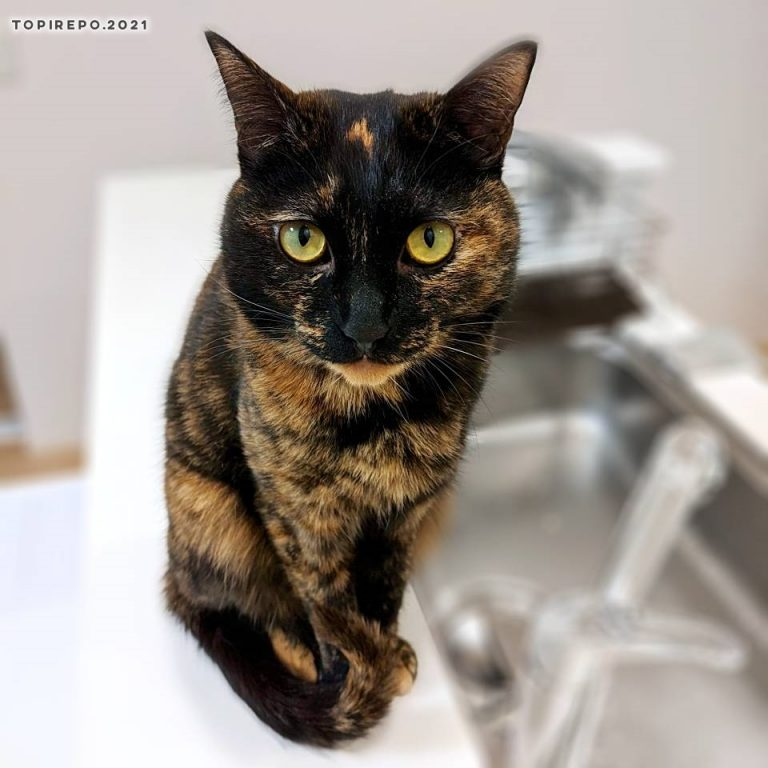 キッチンカウンターでおすまし猫