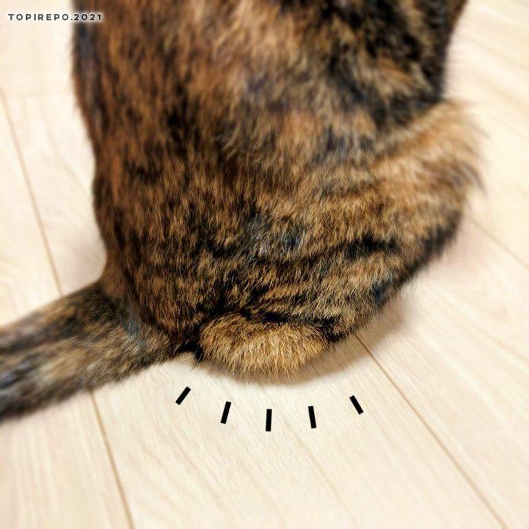 猫のハミ尻?