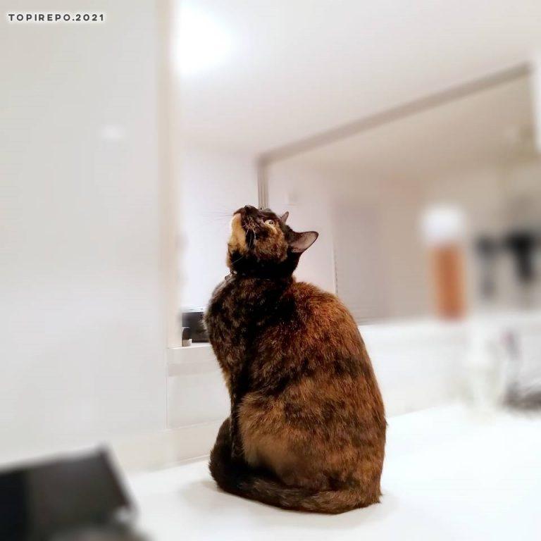 なんか見てる猫
