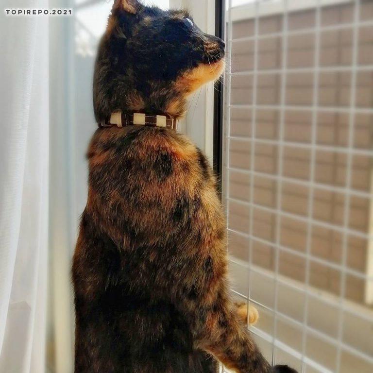鳥に反応する猫
